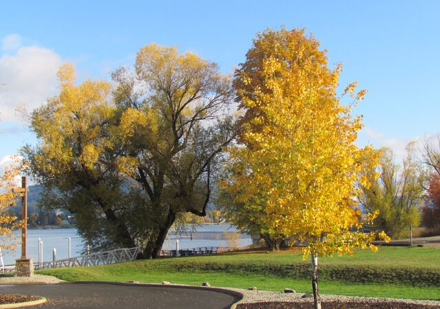Willow & Chestnut trees in Fall colors